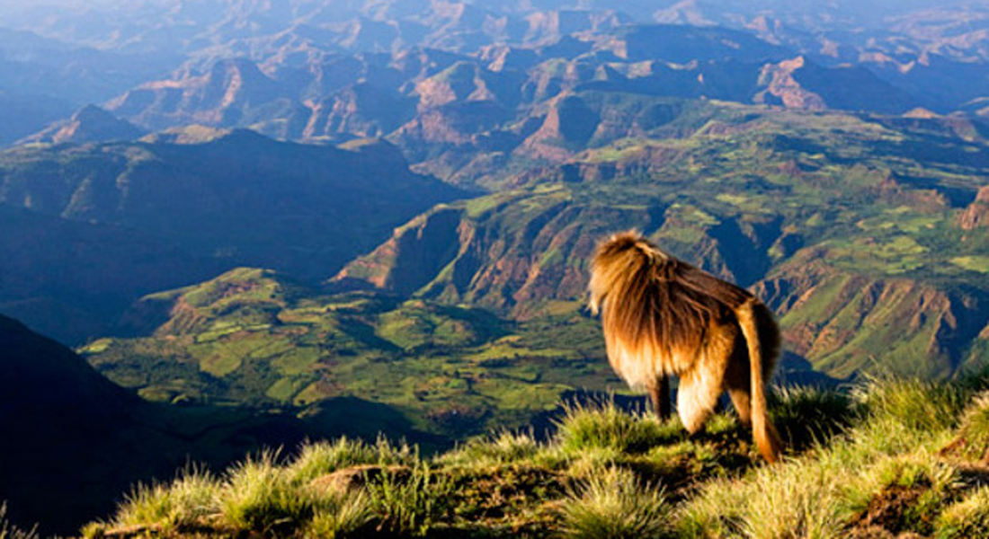 trekking-at-the-highest-peak-of-ethiopia-with-dram